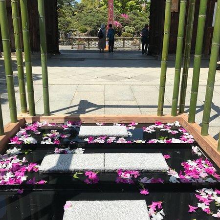 Sorakuen Garden: photo1.jpg