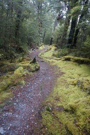 Lake Daniell Track