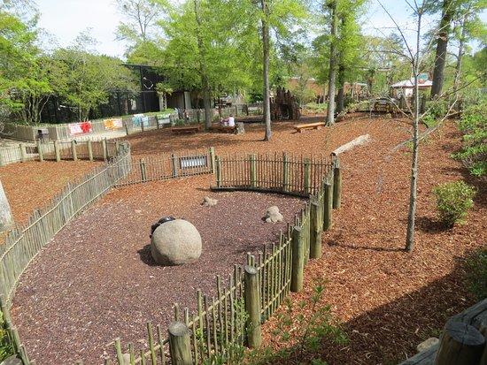 Birmingham Zoo: Giraffe feeding station