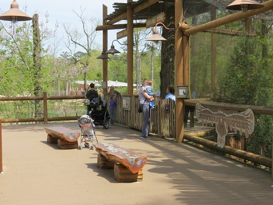 Birmingham Zoo: Dining near the African savanna