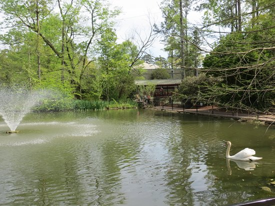 Birmingham Zoo: Fox