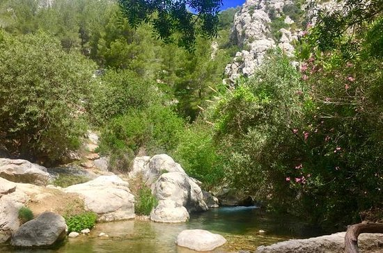 Afternoon Trip to the Algar...