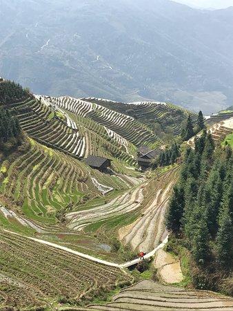 Wendy Wei Tours : Longji Rice Terraces