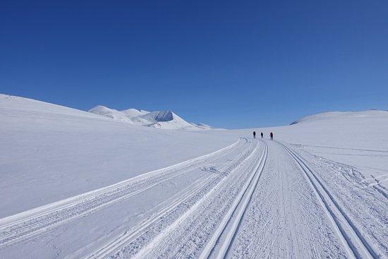 Hovringen, Νορβηγία: Rondane Nasjonalpark