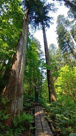 Nibunamizusawa Sugi Shokubutsu Gunraku Forest Reserve: ここで写真を撮るといいことがあるとガイドさんが言っていました^^