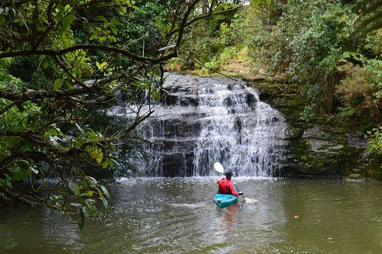 Albany, Nya Zeeland: Kayak accessible, too