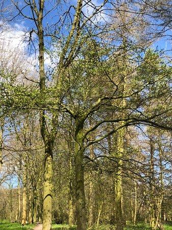 Helmsley, UK: Woodland Walk