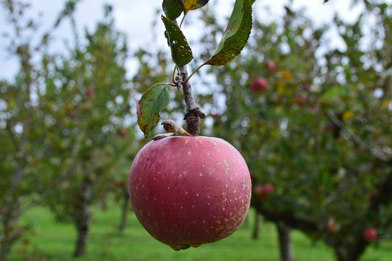 Coatesville, New Zealand: An apple a day