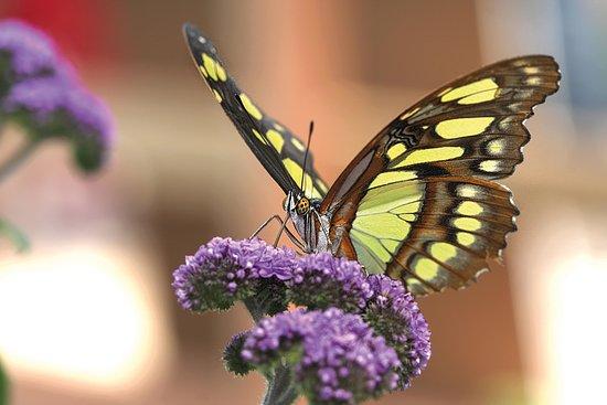 Emsbüren, Alemania: Vlindertuin