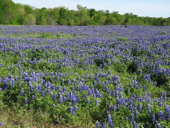 Ennis, TX: Laneview Rd