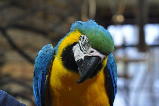 Papugarnia Ptasi Mozdzek