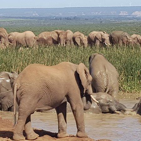 Addo Elephant National Park, Sudáfrica: IMG_20180421_142800_685_large.jpg