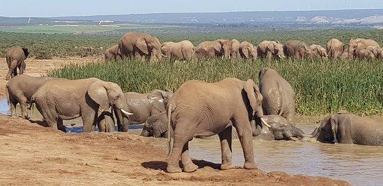 Addo Elephant National Park, Sudáfrica: 20180421_121019_large.jpg