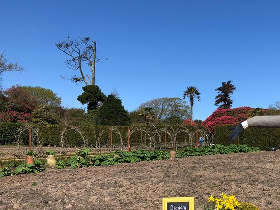 St Austell, UK: The kitchen garden. Too early for for flowers.