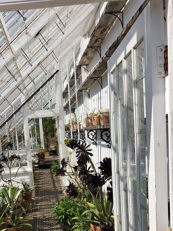 St Austell, UK: Greenhouse with vines, etc, in the Kitchen Garden.