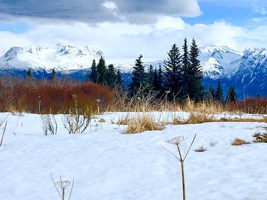 Fritz Creek, AK: Beautiful snow scene