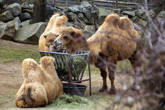 Southwick's Zoo: Camel enclosure