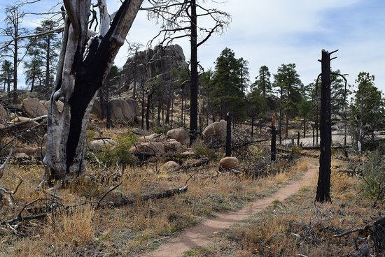 Granite Mountain Trail 261: Part of basin area near top. 2013 wildfire burned most trees.