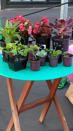 New Norfolk, Australia: plants