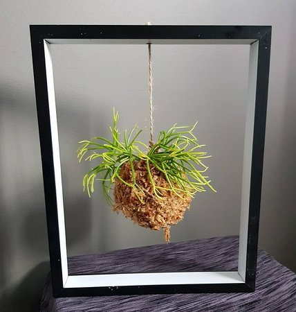 New Norfolk, Australia: decor plants