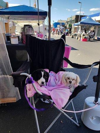 New Norfolk, Australia: spoilt market dogs