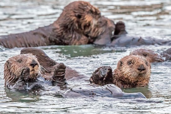 Best Western Tradewinds: Just two blocks fro the water and otters.