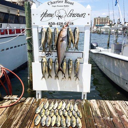 Gulf angler fishing charters destin 2018 all you need for Gulf angler fishing charters