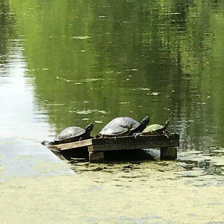 Audubon Swamp Garden: photo8.jpg