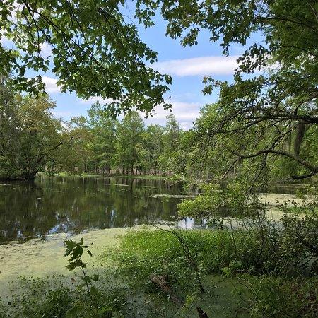 Audubon Swamp Garden: photo9.jpg