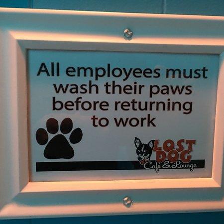 photo2 jpg - Picture of The Lost Dog Cafe, Binghamton - TripAdvisor