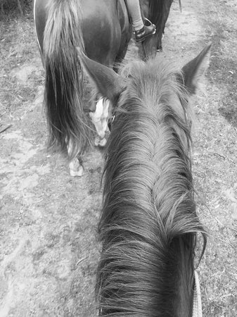 Crackenback, أستراليا: On the 1 and a half hour trail ride
