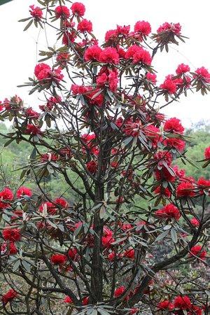 Bijie, China: Flower