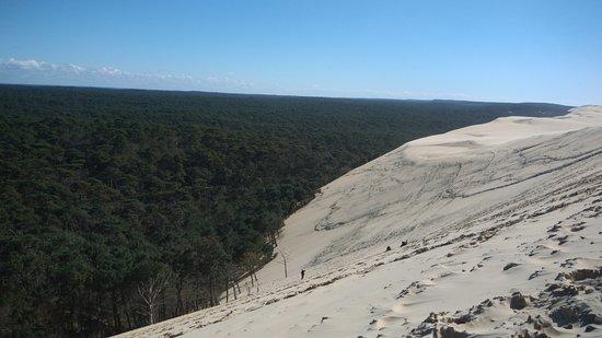 Dune du Pilat: Duna