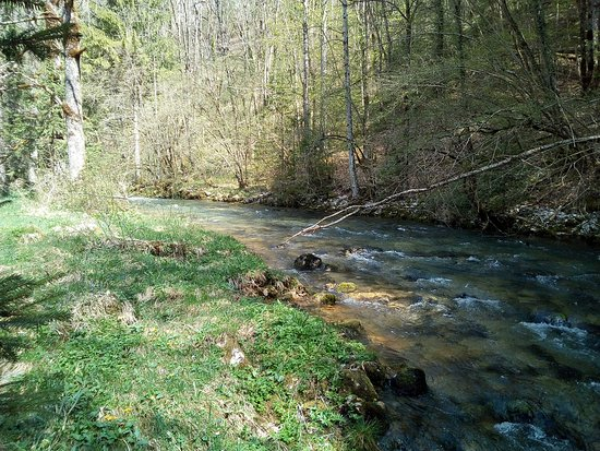 Source de la Saine: Bras principal de la Saine 300 m environ en aval