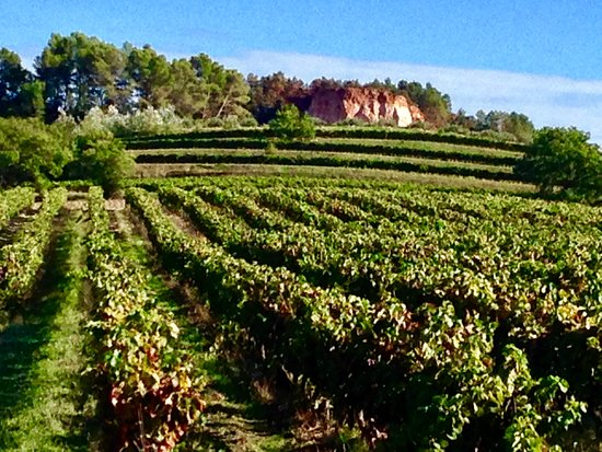 Vignoble Chasson Château Blanc