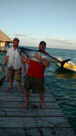 Glovers Reef Atoll, Belice: King Mackerel