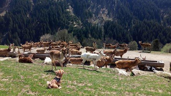 Aurach bei Kitzbuehel, Østrig: mmexport1524414463797_large.jpg