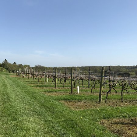 Biddenden Vineyards: photo5.jpg