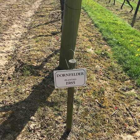 Biddenden Vineyards: photo6.jpg