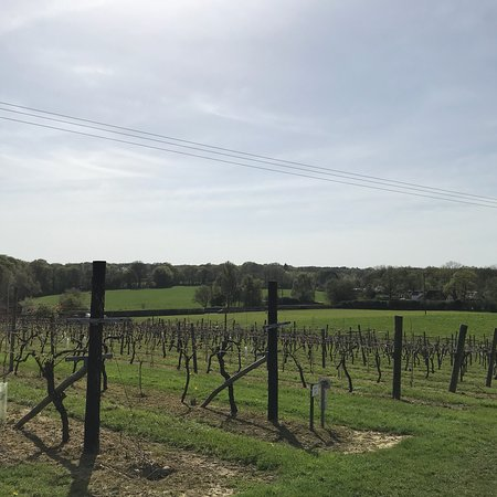 Biddenden Vineyards: photo7.jpg