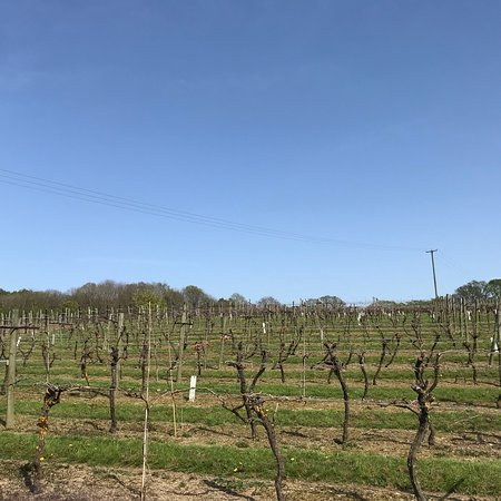 Biddenden Vineyards: photo8.jpg