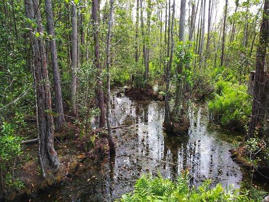 Tibet-Butler Preserve: Good ole Florida!