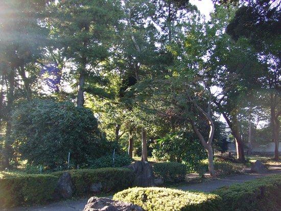 Bonsai Chuo Ryokuchi Park