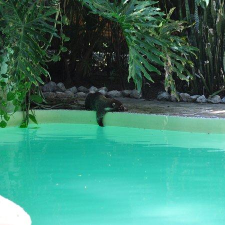 El Pequeno Gecko Verde : photo0.jpg