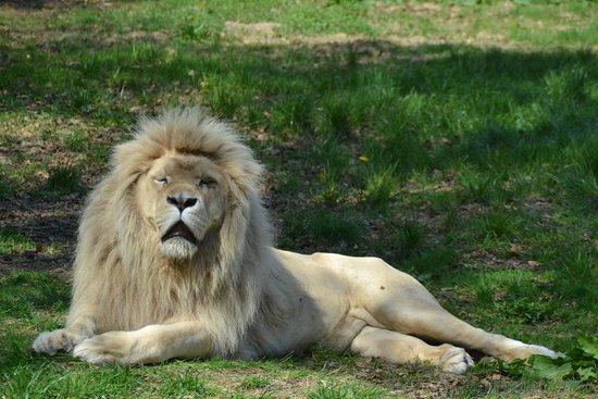Jurques, Prancis: lion blanc
