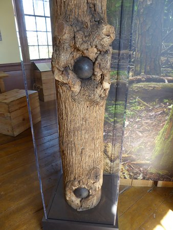 Locust Grove, VA: Cannonballs in a Tree