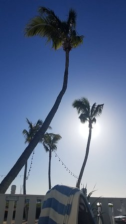 Coconut Palm Inn Picture