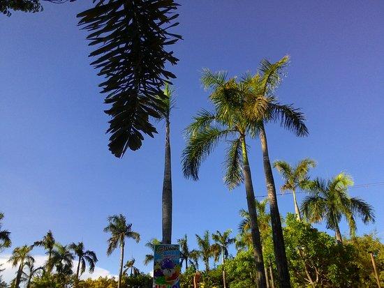 San Rafael, Philippines: trees
