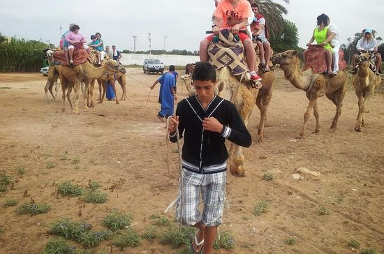 Camel & Horse Riding