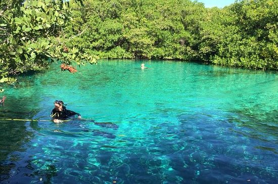 Two Cenotes Snorkeling Tour from...